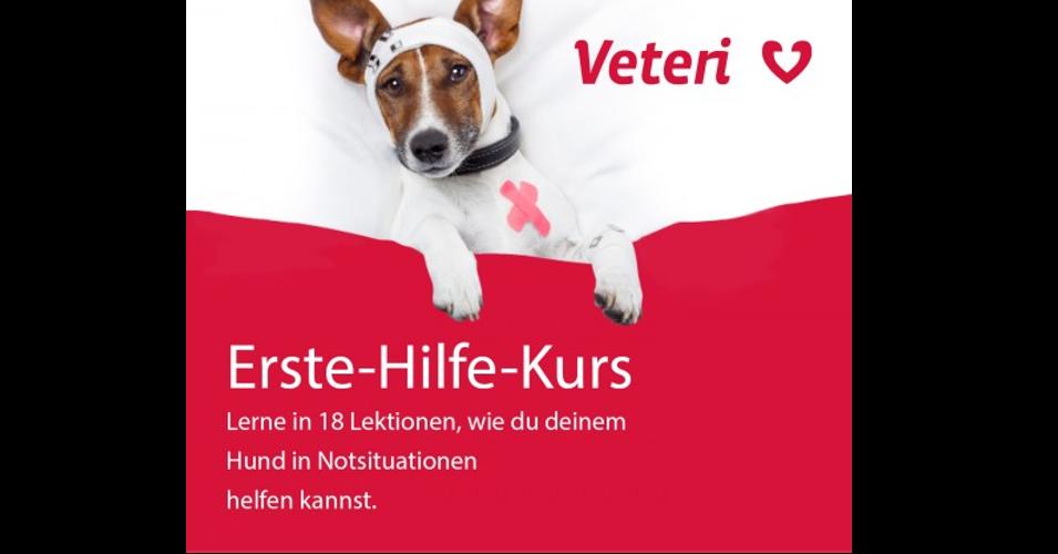 Veteri - Erste Hilfe Kurs für Hunde